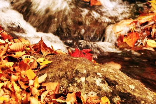 autumn-507577_960_720