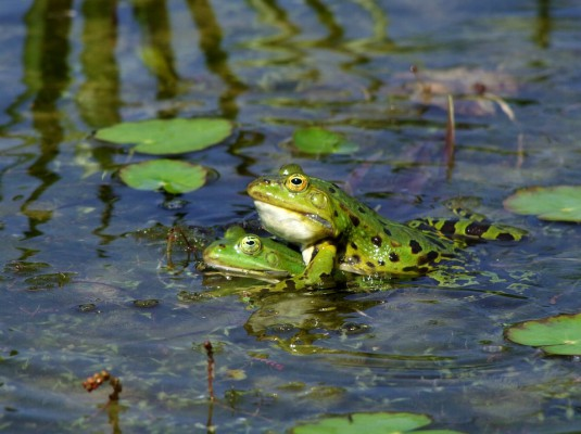 frog-174725_960_720