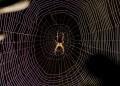 Муха или паяк?