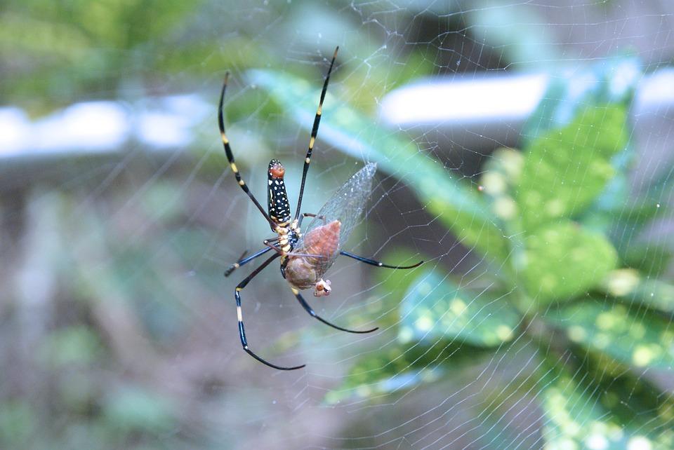 spider-1090780_960_720 (1)