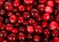 Учени: Червените боровинки не помагат при пикочни инфекции