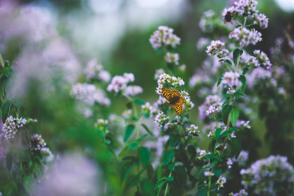 butterfly-791487_960_720