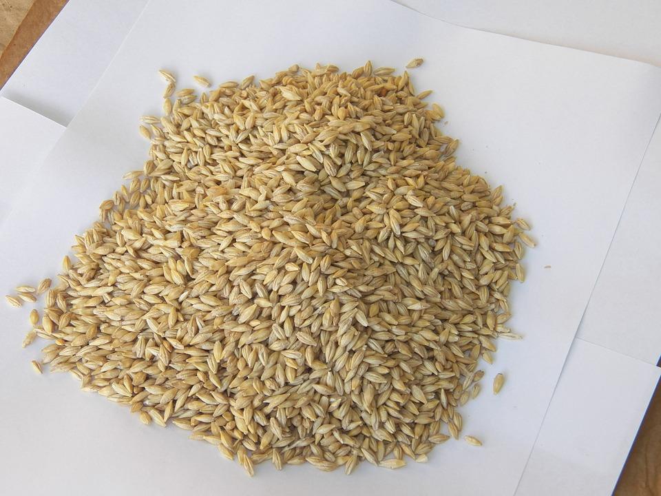 barley-seeds-524679_960_720