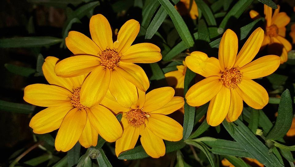 flowers-1415759_960_720