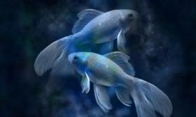 Рибите гледат живота през розови очила
