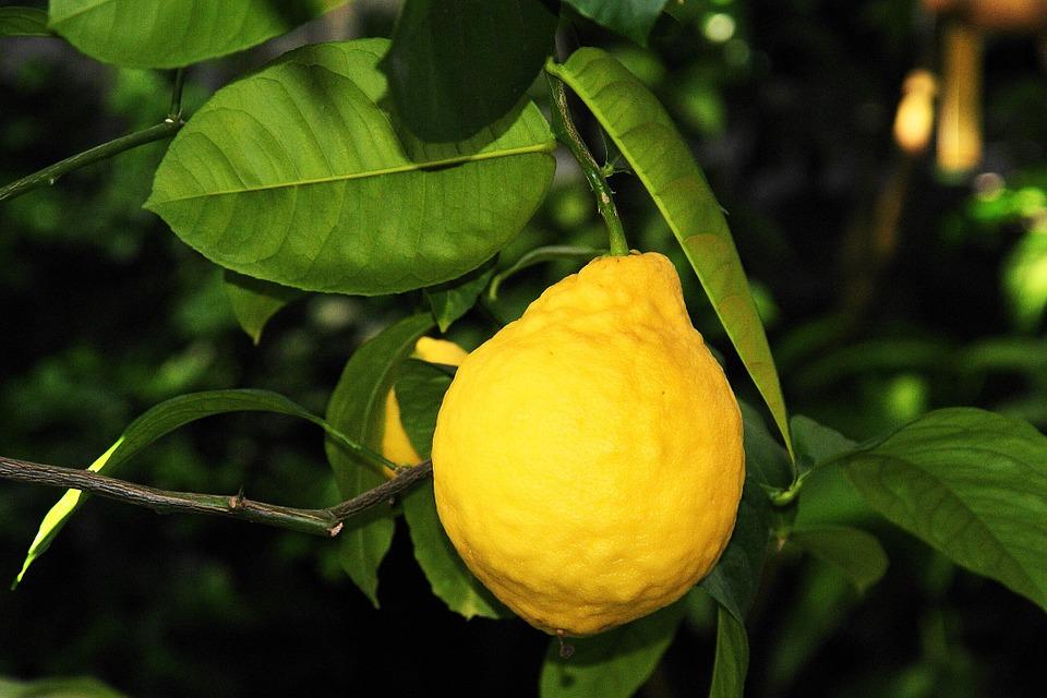 lemon-289801_960_720