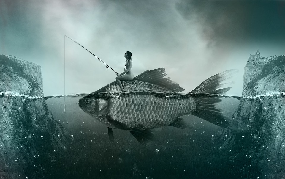 fish-1372923_960_720