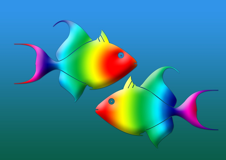 fish-95618_960_720