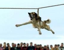 Протест срещу Тричането на кучета