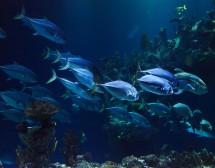 Храна от морското дъно: фитопланктон
