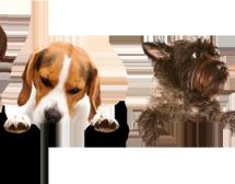 Студенти – ветеринари ще лекуват безплатно бездомни животни