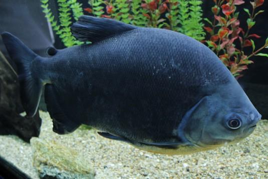 fish-2064159_960_720