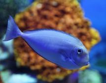 Мъжът Риби се нуждае от глътка самота, а любовта му – от простор
