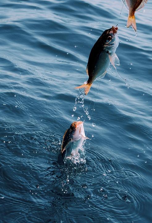 fish-869191_960_720