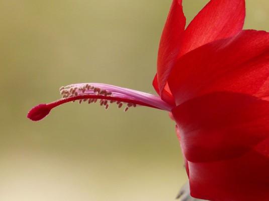 flower-52095_960_720
