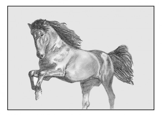 horse-825712_960_720