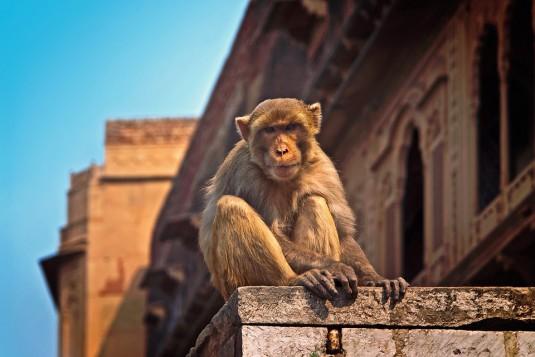monkey-1103141_960_720