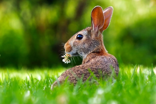 rabbit-1903016_960_720