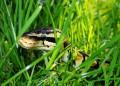 Змия в годината на Огнения Петел