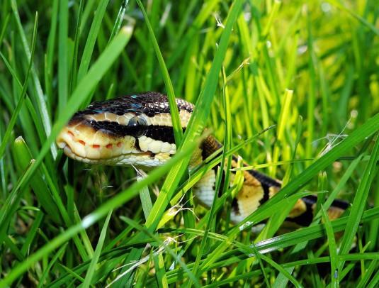 snake-365037_960_720