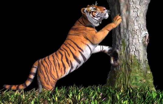 tiger-2099826_960_720