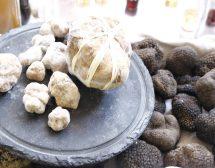 Трюфелите – съкровището на Истрия. 4 рецепти