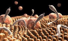 Признаци за наличие на паразити в организма