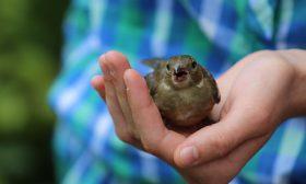 Eксхумация на птиче