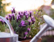 9 растения, които отмиват стреса
