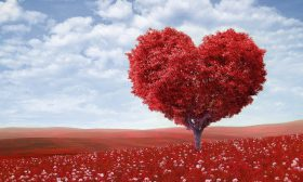Това нещо, наречено любов