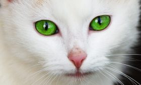 Спомени за котки и други