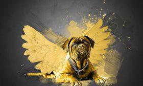 Иде годината на Жълтото Земно Куче