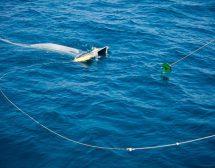 Черно море е едно от най-замърсените в света с микропластмаса