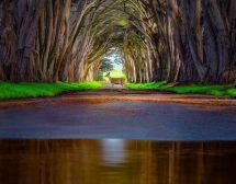 Как изглежда тишината! 20 удивителни снимки