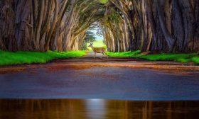 Магията на природата в 20 снимки