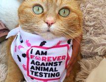 Родни звезди срещу тестването на козметика върху животни