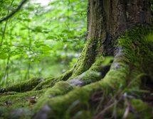 Как лекува гората