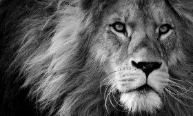 Лъвът – императорската зодия