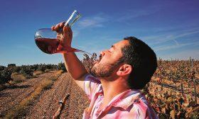 Виненият маршрут Cigales в Испания: И хайде здраве и хубаво вино