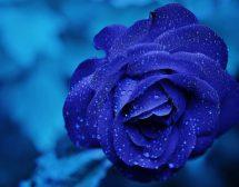 Раждането на синия цвят