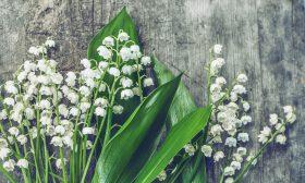 От кои растения да се пазят децата