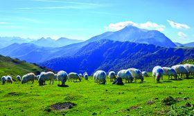 По дирите на фермерските сирена в Северна Испания