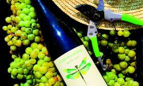 Ревю на българските винени сортове