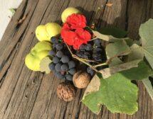 Рачел от грозде и дюли