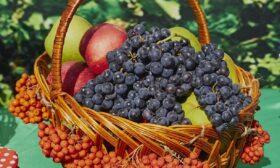 Рачел от ябълки и грозде