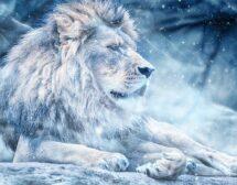 2020: Годишен хороскоп за Лъв