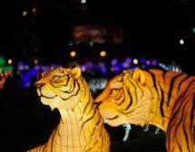 2020: Китайски хороскоп за Тигър