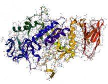 Важната роля на ензимите и как да си ги набавим