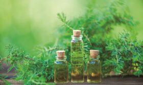 Лечебната сила на етеричните масла. Чаено дърво