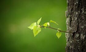 Пролетен детокс на черния дроб